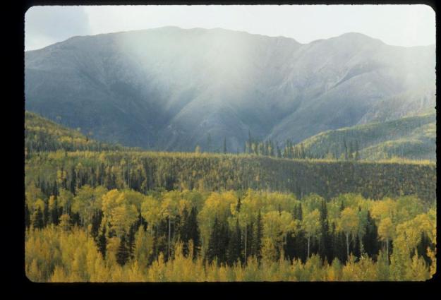 photo, fall, myles